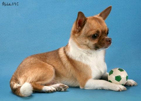 IRON DOG N2